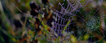 Spinnenoverlast - Tuinieren Nederland